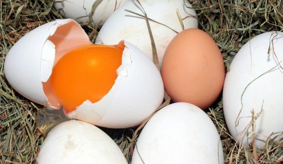 egg-1268240_1920